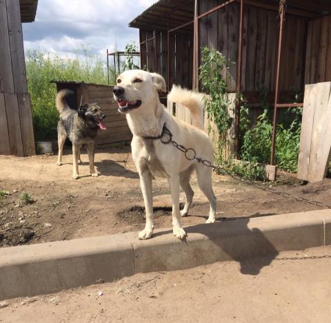 В приют животных «Надежда» власти Бердска передали микроавтобус из «Юноны»