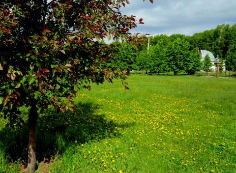 Посади своё дерево в парке Бердска! Назначена дата народной акции