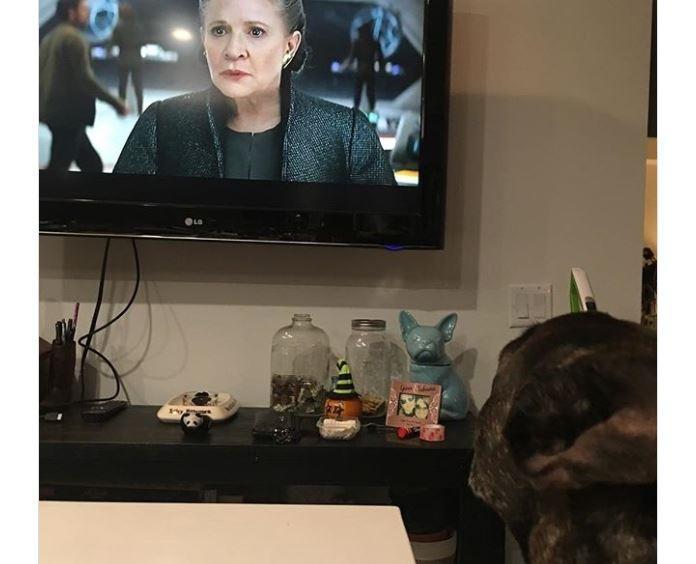 Интернет растрогал пёс Кэрри Фишер, который смотрел на хозяйку в трейлере