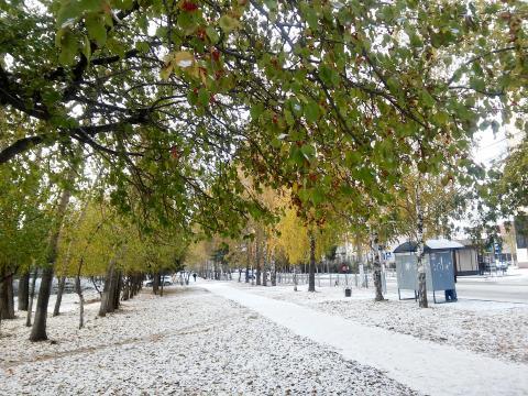 Похолодание и мокрый снег ожидаются 6 октября в Бердске