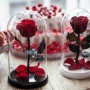 Порадуйте своих близких необычным цветком