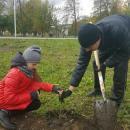 В центральном парке Бердска неизвестные тайком высадили голубые ели