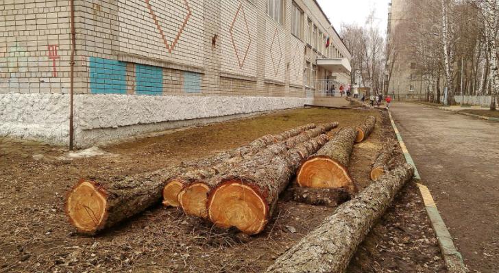 Вырубка деревьев возле школы №55 продолжается – срубили молодые березы
