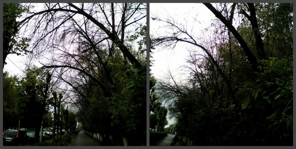 На улице Крупской ветхие деревья рискуют упасть на голову прохожих