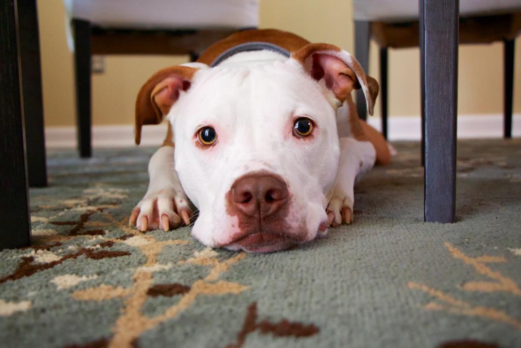 В России могут ввести платную регистрацию домашних животных