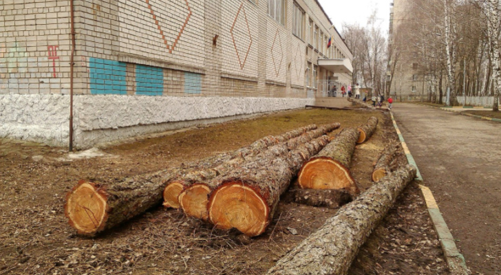 Администрация объяснила, почему срубили деревья у школы №55