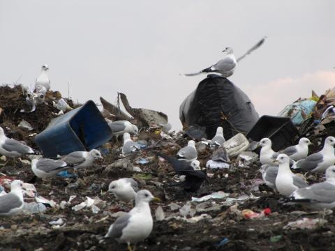 Упорядочит мусор специальная комиссия в Бердске