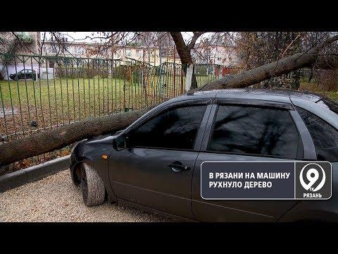 На улице Халтурина поврежденное дерево рухнуло на автомобиль