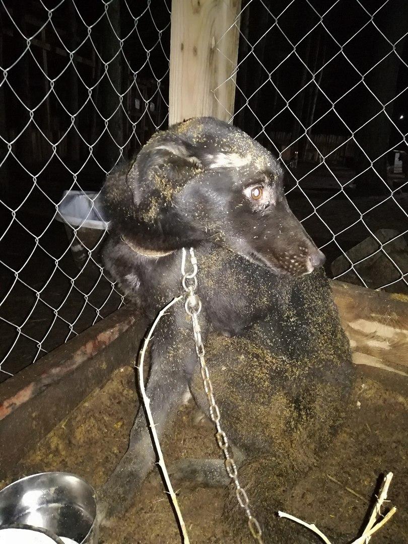 «Собаку просто оставили умирать» — животное месяц прожило в колодце
