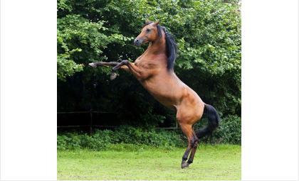 Будут судить хозяина лошади, копытами убившей мальчика