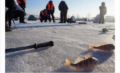 Рыбаков Бердска оштрафуют за выход на тонкий лёд