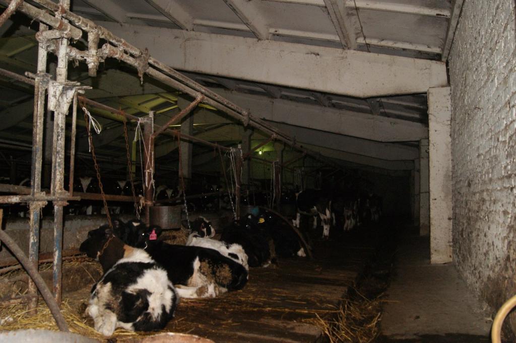 В совхозе под Рязанью животные находятся на грани выживания
