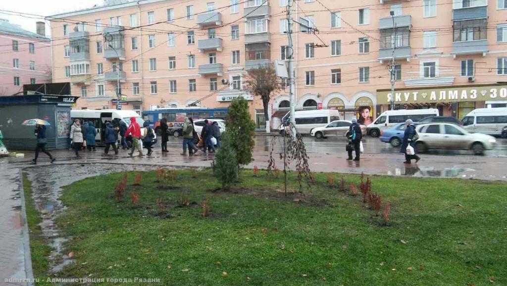 260 молодых деревьев и кустов посадили на площади Победы