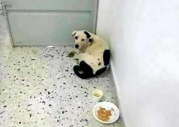 Брошенная в аэропорту собака умерла от тоски по хозяевам
