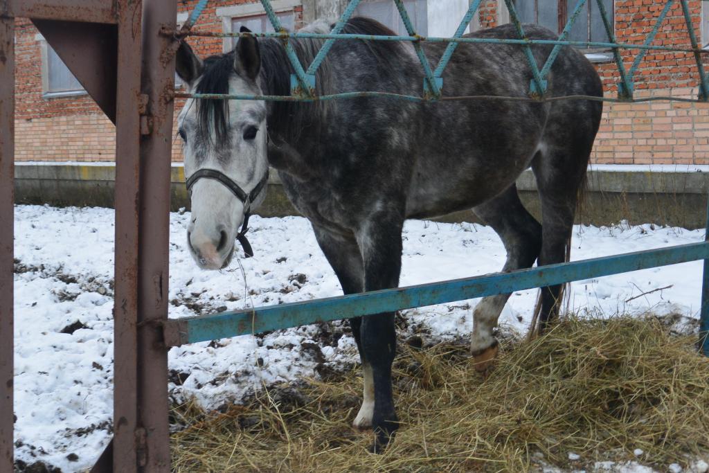 Под Рязанью погибают десятки лошадей редкой породы