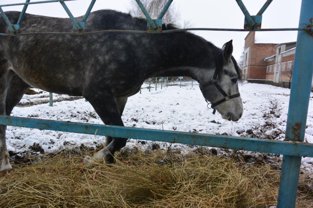 Из конезавода в Дивово пропали еще 20 лошадей - зоозащитники
