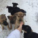 В приютах нет мест — пятнадцать щенков замерзают на улице