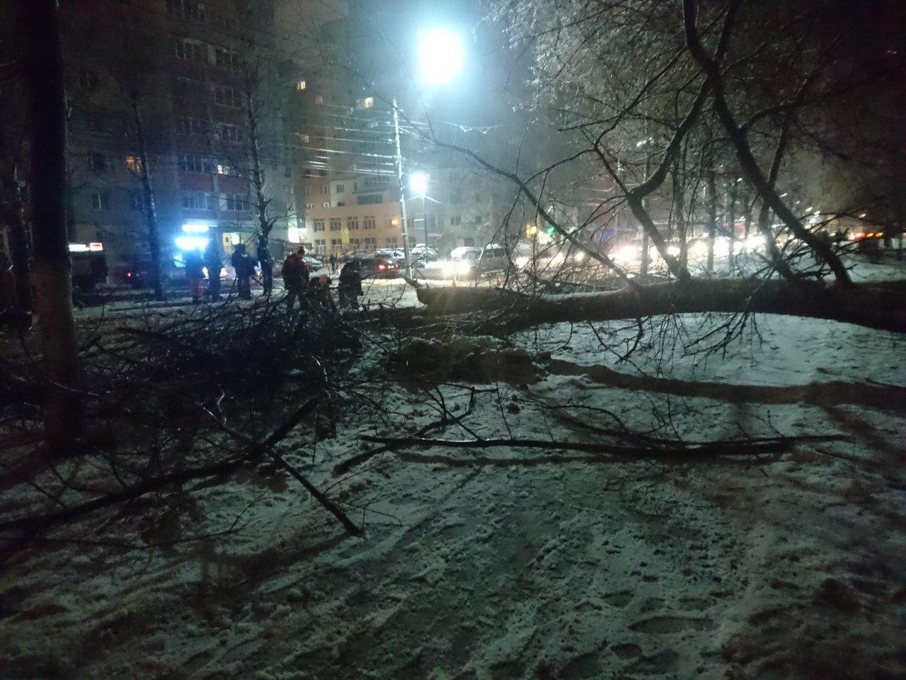 Фото-факт: На улице Народном бульваре рухнуло дерево